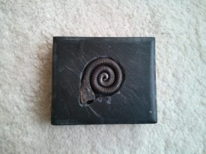 Iron fossil set in slate sculpture